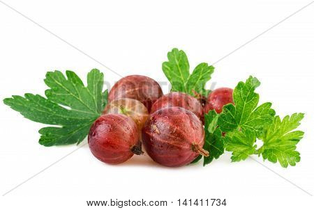 Gooseberry red ripe berry with leaf isolated on white