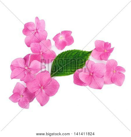 Creative arrangement of pink flowers on white background. Flat lay.