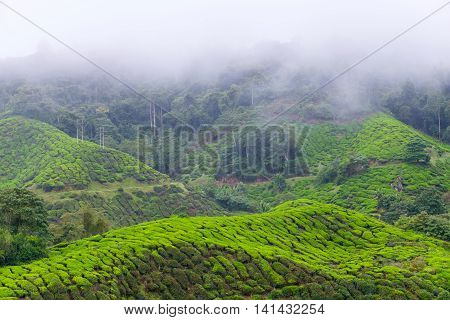 Mountain and tea plantations covered with fog in morning at Cameron Highlands Malaysia.