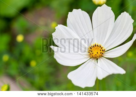 one isolated decorative white flower is located a closeup on an indistinct background
