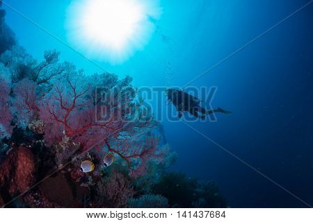 Divers exploring the coral reef in a tropical sea