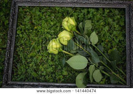 , fresh roses in the picture frame on the meadow