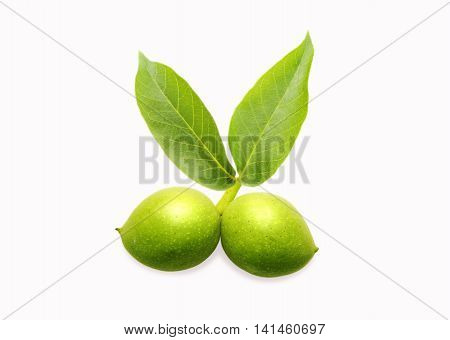 Walnut isolated on white background. Green young walnut.