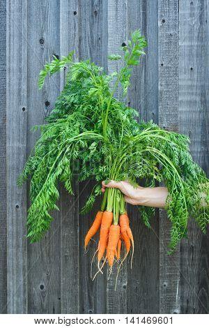 Fresh Rustic Harvest