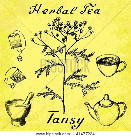 Tansy hand drawn sketch botanical illustration. Vector drawing. Herbal tea elements - cup teapot kettle tea bag bag mortar and pestle. Medical herbs. Lettering in English. Grunge background