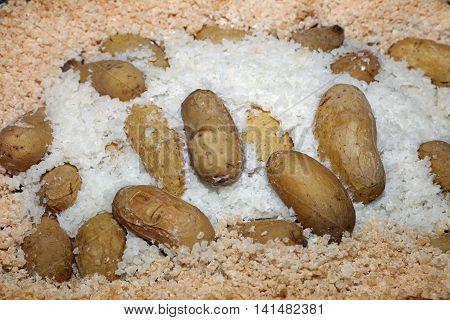 Baked Potato in Salt Crust with Egg White