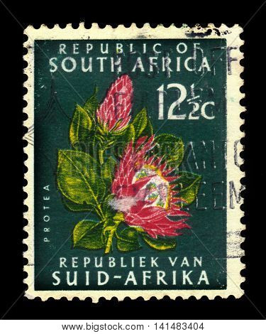 South Africa - CIRCA 1961: a stamp printed in the South Africa shows Protea Flower,  national symbol of South Africa, circa 1961
