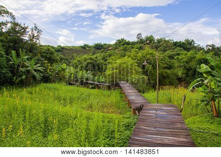 Wooden path through the rice field with mountain background