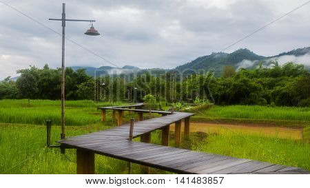 Wooden walkway over rice field with mountain background