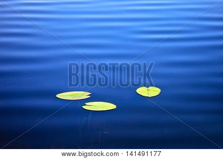 Lake surface of the water with leaves