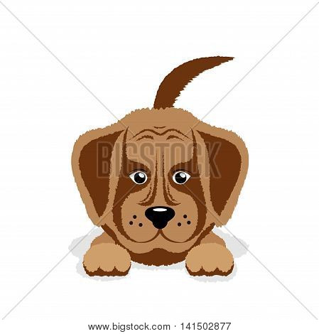 On the image it is presented dog puppy on a white background