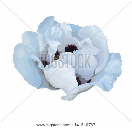 beautiful Plant Paeonia arborea (Tree peony) white flower drawing isolated on white background. Hand-drawn with effect of drawing in watercolor. Design element for decorating greeting cards and invitations to the wedding birthday