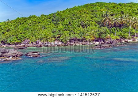 Palm Jungle Island Sea