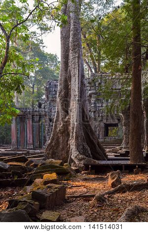 Old Tree In Angkor Wat Cambodia.