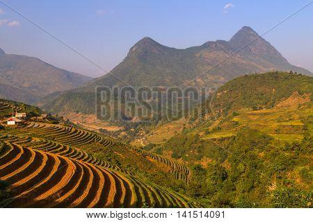 Rice Fields On Terraced Mountain Vietnam