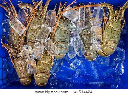 Ice Lobster Sea Food.
