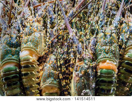 Lobster Sea Food.