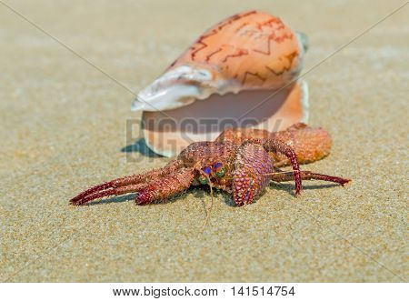 Hermit Crab In The Shell On A Sand Beach