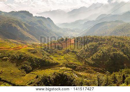 Rice Fields On Vietnam