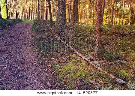 Forest Summer
