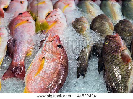 Fish Ice At Street Market