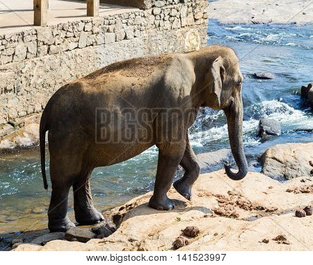 Elephant In River Outdoor Leisure
