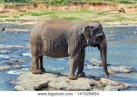 Elephant Bath In River Sri Lanka
