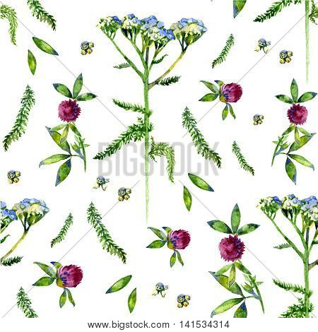 Wild flowers illustration. Watercolor seamless floral pattern