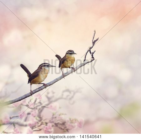 Two Carolina Wrens Perch on a branch
