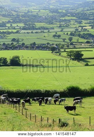 Farmland landscape with livestock in Axe Valley, Devon