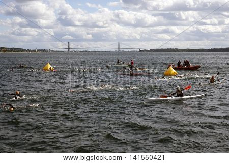 FREDERICIA DENMARK - AUGUST 6 2016: Triathletes swimming in the sea close to the outer marker buoys in the Little Belt Little Belt Bridge in the background - Competition Challenge Denmark in Fredericia harbor August 6 2016.