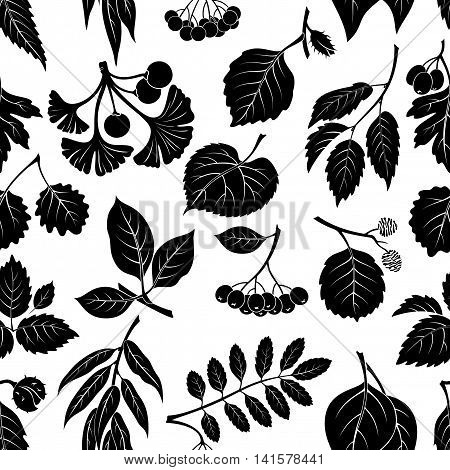 Seamless Nature Background with Pictogram Tree Leaves, Willow, Hawthorn, Poplar, Aspen, Ginkgo Biloba, Elm, Alder, Linden, Rowan, Chestnut, Black Chokeberry and Beech. Black on White. Vector