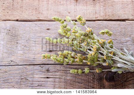 Bunch Of Mountain Herbs