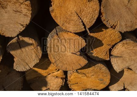 logs felled wood for firewood in the summer heat