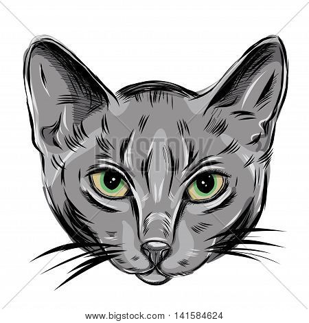 Vector Portrait of Domestic Cat. Russian Blue Cat. Cute young kitty with green eyes. EPS