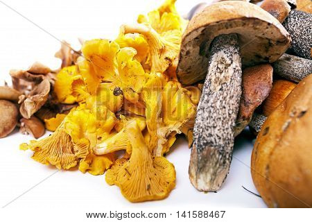 Collection Of Delicious Edible Mushrooms