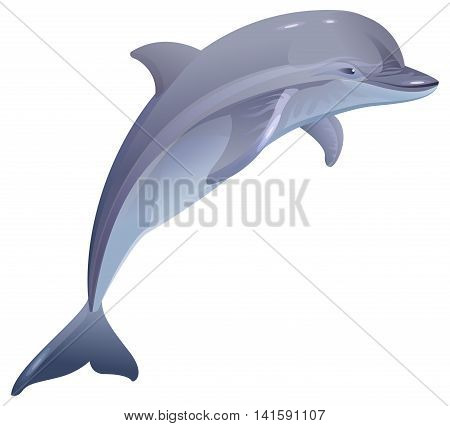 Marine mammal dolphin. Isolated on white vector illustration