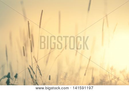 Meadow Floral nature in early morning - vintage soft  bokeh background,  wild flowers landscape