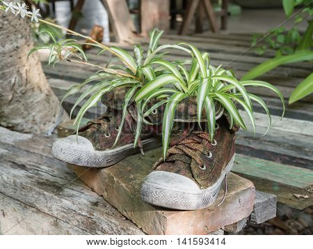Plants on old shoes (instead of flowerpot)