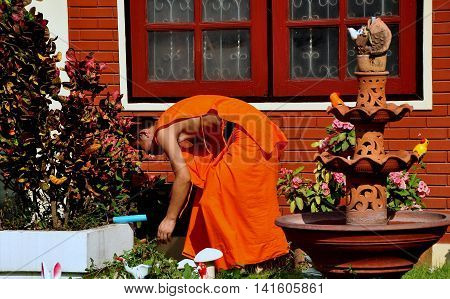 Chiang Mai Thailand - December 22 2012: Buddhist monk in bright orange robe at work in a garden at Wat Parpowrai
