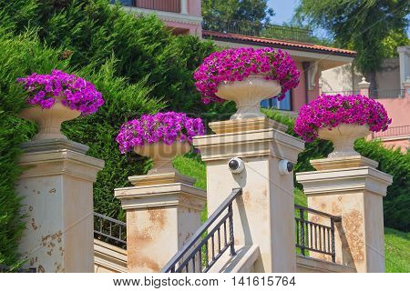 Vases with red petunia flowers in front of luxurious hotel