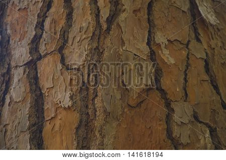 Exotic brown wood bark Texture for background