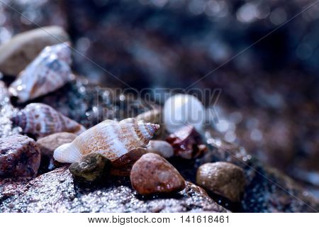 wet seashells and small stones lying on a huge granite wet stone on the beach, on the blue shore of the river