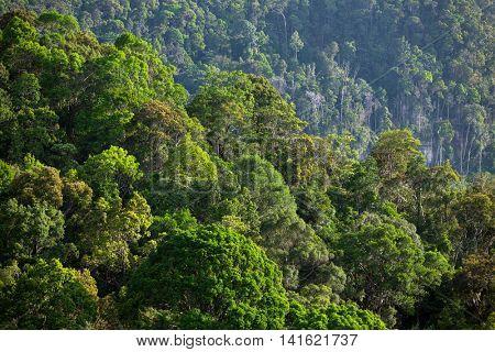 Lush green tropical rainforest