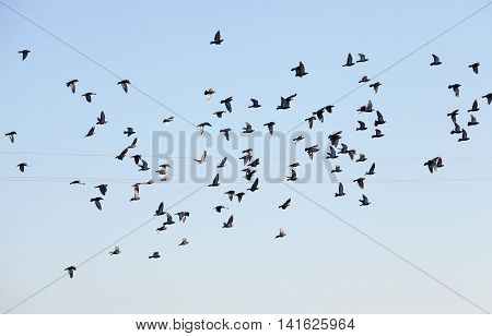 photographed close-up blue sky, in which a flock of birds flying, visible silhouettes, daytime,