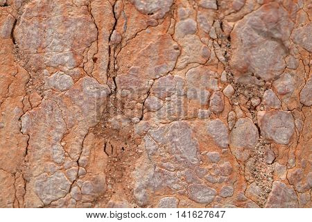 The surface of red nodular limestone of Triassic age from Italy.