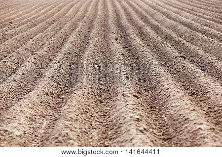 plowed agricultural field in which the crop is grown, the furrows in a field, close-up