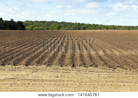 agricultural field that was plowed furrows for planting potatoes. Spring. blue sky