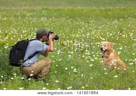 Photography man and his dog on a green meadow. Man taking photos of the dog. Golden Retriever