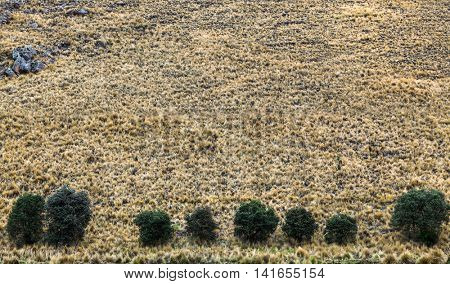dry grass in a pasture in the mountains